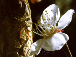 Blooming by MaryBrodzeli