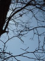 Branches by EverydayStock