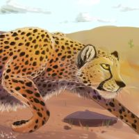 Cheetah by fronanc345