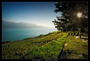 Lac Leman by snoopersen