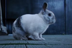 Ancord the rabbit 16 by Panopticon-Stock