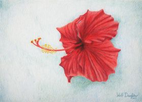 Hibiscus by Wolf-Daughter