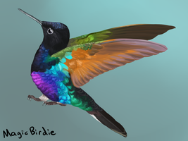 Little Hummer by MagicBirdie