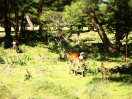 Deer in a forest (4) by yukino-k