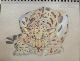 Leopard sketch! by Nmaster94