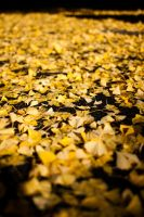 Yellow Leafs by esbenlp