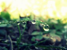 Dew Drops by That1nerdychick