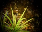 O.o green spikey plant by mandy-the-spoon