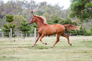 Dn wb trot side view mane up by Chunga-Stock