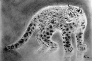 Snow Leopard on Thin Ice by qqClare