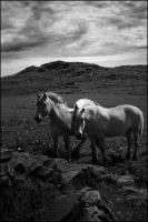 Silence Before The Storm II BW by Besaid