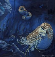 Nautilus by marcgosselin