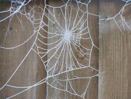 frosty spiders web by thebluemaiden
