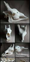 Male Giraffe Skull by CabinetCuriosities