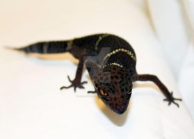 Chinese Cave Gecko - 1 by creative1978