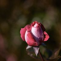 blossoming by vicente-oliveira