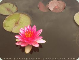 water lily by GuddiPoland