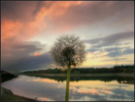 dandelion on sunset by renatoart