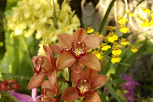 Orchids by SilverBear-Photos