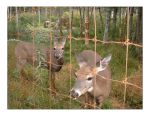 Group Of Deer_Wild Life Park by rabb1t
