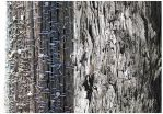 Wooden Diptych by inacom