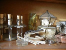 Reptile Amphibian insect etc shelf pt 1 by modastrid