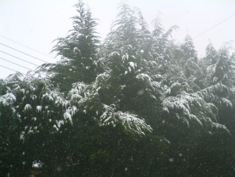 Snowy Trees by Delli0Stock
