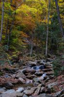 White Mountains  Fall Foliage  251 by FairieGoodMother