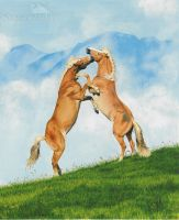 playing Haflinger by Strecno