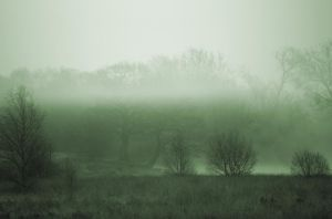 Misty Parkland by Grunvald