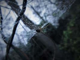 Under The Web. by Calidris555