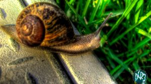 snail hdr by DCRIII