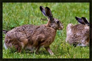 Rabbits in the afternoon by deaconfrost78
