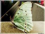Fract-half butterfly by digitalminded