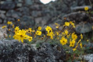 Flowers Surrounding a Ruin by 100-days