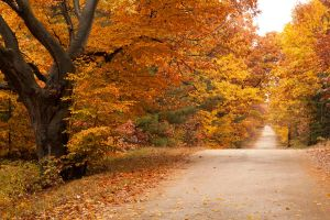 Lonely Country Road in Autumn by starfire777