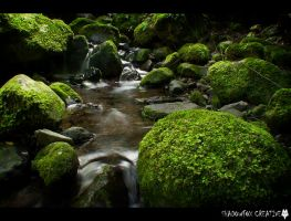 Nichols Creek 7 by shadowfoxcreative