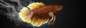 Betta Banner- The Fish Forums by RachelleFryatt