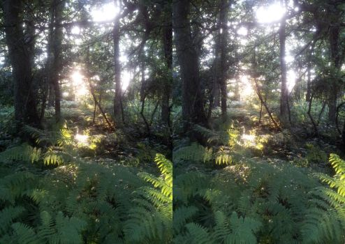 the light through the trees crossview by thefailmaster
