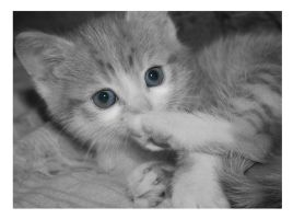 Baby blue eyes by mzkate