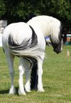 removed tack coloured cob by suuslovertje