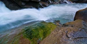 Algae on the Rock by alban-expressed