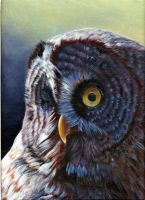 owl in acrylic by jaquesmehawf