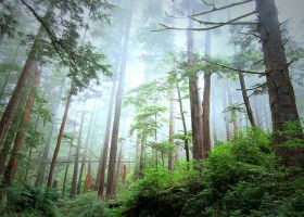 the everforest III. by etheraiel