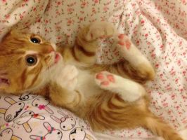 Playful ginger kitten by KiceMice