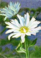 Drawn to Help 4.4: Bellis by theperian