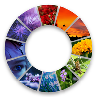 Color wheel by firefox2171