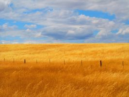 Golden with Cloudy Sky of Blue by lionesspuma