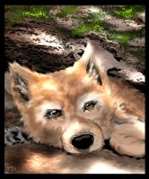 Red Wolf Pup by vivenaishide