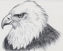 Small Sketch: Eagle by JacquelineChroma